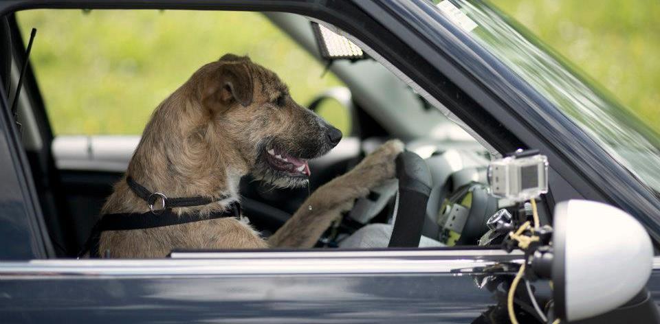 Perros que Manejan Carros